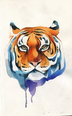 Tiger head painted in watercolor