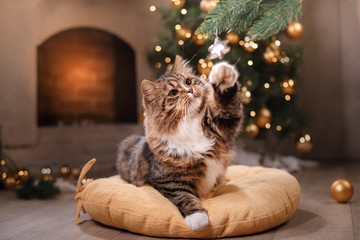 Tabby and happy cat. Christmas season 2017, new year, holidays and celebration