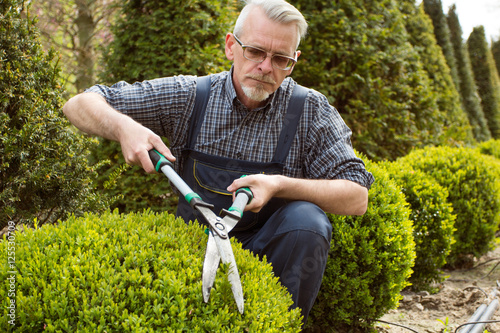 Gardener Cuts A Decorative Shrub Shears Stock Photo And