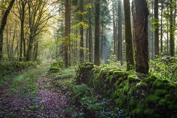 un chemin dans un sous bois avec un muret couvert de mousse