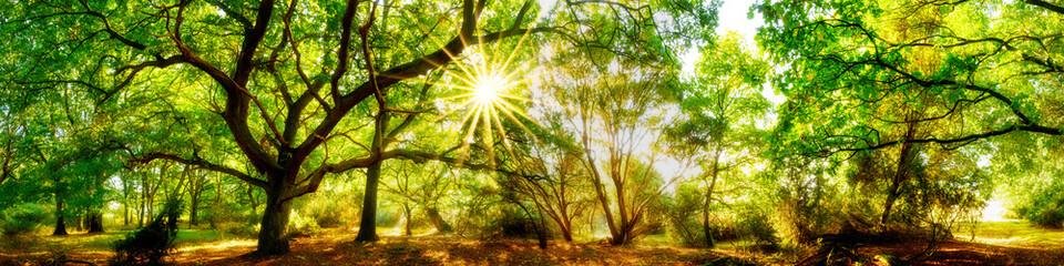 Fototapete - Wald Panorama mit Sonne