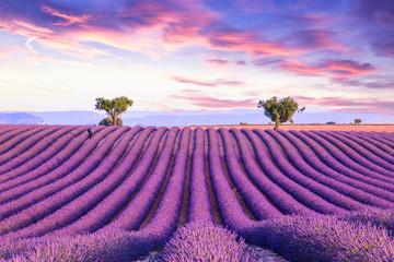 Fototapeta Lavender field summer sunset landscape obraz
