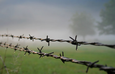 Barbed Wire Morning