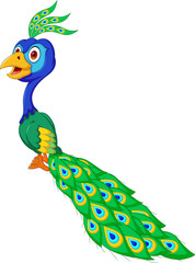 cute Peacock cartoon