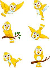 collection of yellow bird cartoon posing