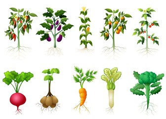 Many kind plant of vegetables with roots illustration