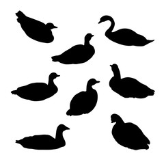 waterfowl birds set