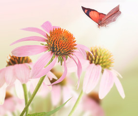 Beautiful butterfly and flower, closeup. Nature concept.