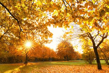 Herbst im Park, sonniger Herbsttag
