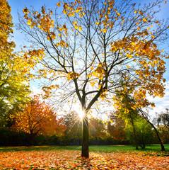 sonniger Herbsttag im Park