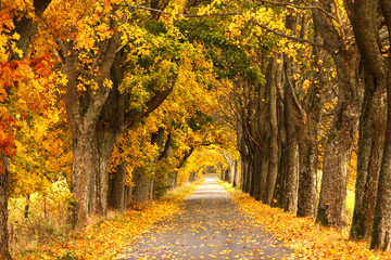 Autumn Road. /Kashubia, Poland