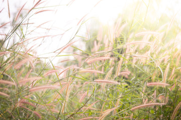 Spring or summer abstract nature background with grass in the me