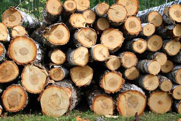 Birch firewood in nature