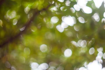 Abstract natural blur bokeh, Blur natural green bokeh background