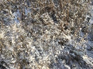 Осенняя природа, выпал первый снег