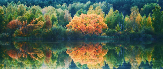 Autumn lanscape with trees reflection in water