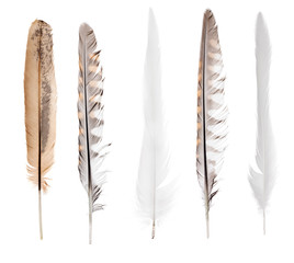 five long straight isolated feathers