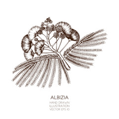 Vector illustration of Silk tree on white background. Hand drawn tropical tree - Albizia julibrissin sketch.