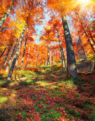 Beautiful view of the autumn forest.