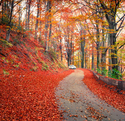 Photo sur Plexiglas Brique Colorful autumn scene in the mountain forest