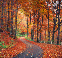 Aluminium Prints Autumn Colorful autumn scene in the mountain forest