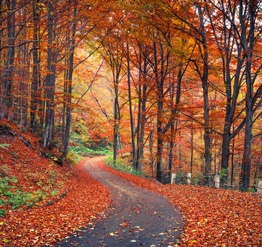 Colorful autumn scene in the mountain forest