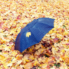 Lonely black umbrella left on the ground which is covered with yellow maple leaves at autumn