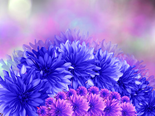 blue flowers,  on pink purple blurred background . Closeup.
