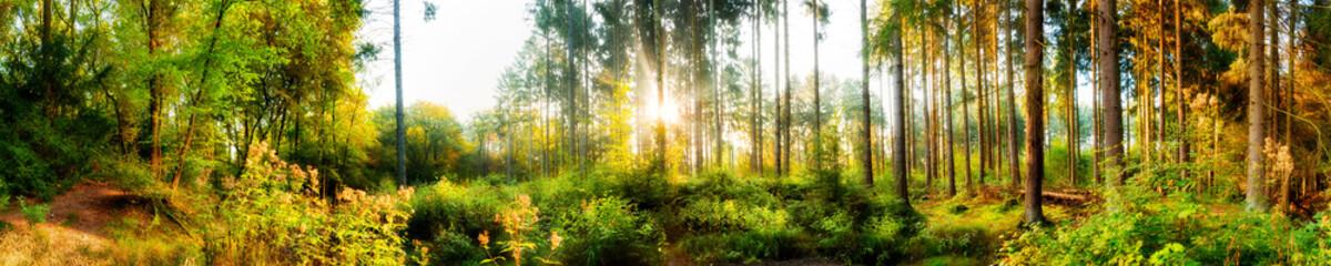 Fototapete - Wald Panorama im Herbst bei Sonnenschein