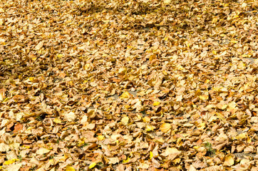 arbres et feuilles d'automne