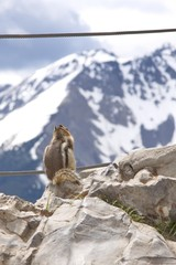 Animals of Canadian Rockies