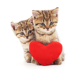 Kittens with toy heart.