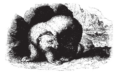 Bear, vintaqe engraving.