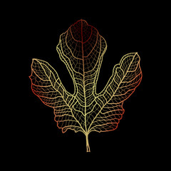 Realistic fig tree leaf. Multicolored Contour on black background