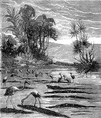 Around the world a kid paris, Hunting flamingos, vintage engravi