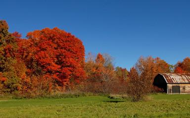 Gorgeous autumn trees under blue sky.