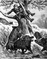 A seat in the countryside. Peccaries rushed against the throne of the tree, vintage engraving.