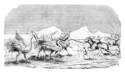 Pygmies fighting the cranes, vintage engraving.