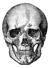 Bony skeleton of the face and the anterior part of the skull, vi