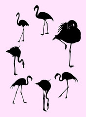 Flamingo birds animal gesture silhouette. Good use for symbol, logo, web icon, mascot, sign, or any design you want.