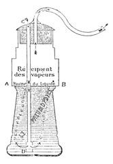 Pneumophila, vintage engraving.