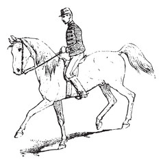 The Passage (riding horse), vintage engraving.