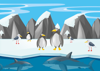 Penguins and other animals in north pole