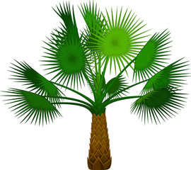 palm tree cartoon for you design