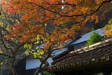 鎌倉 東慶寺の紅葉