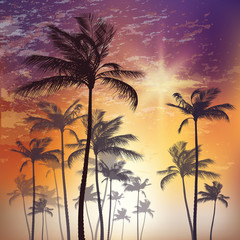Wall Mural - Exotic tropical palm trees at sunset