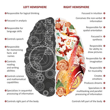 Brain left and right hemispheres infographics vector illustration