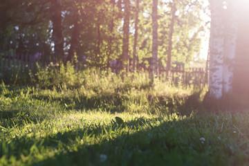 Sunset grass countryside