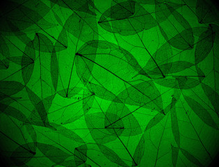 Silhouette leaves texture in dark green background