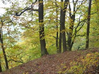 beautifull colorfull autumn in bohemian paradise